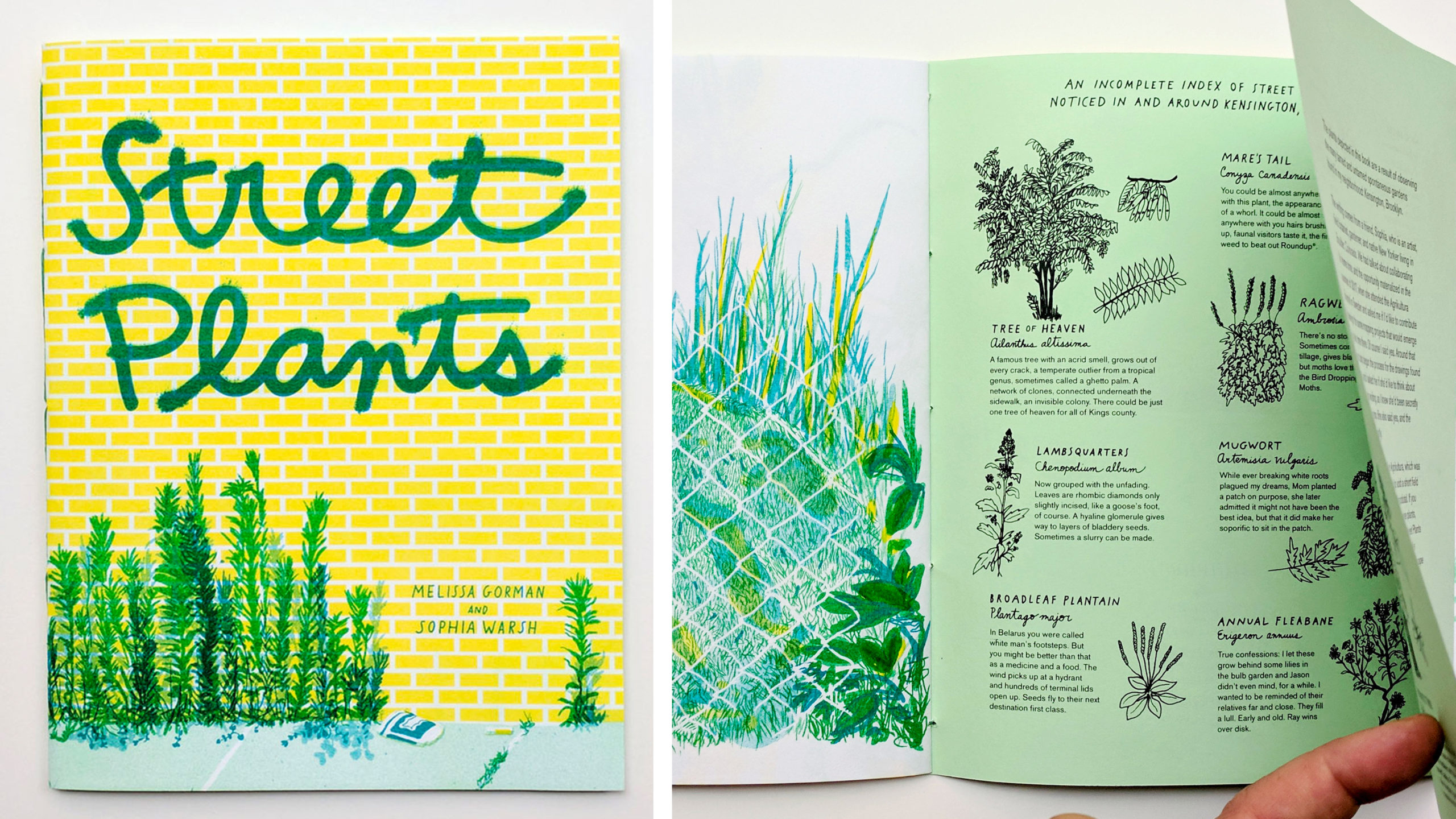 Street Plants book with illustrations