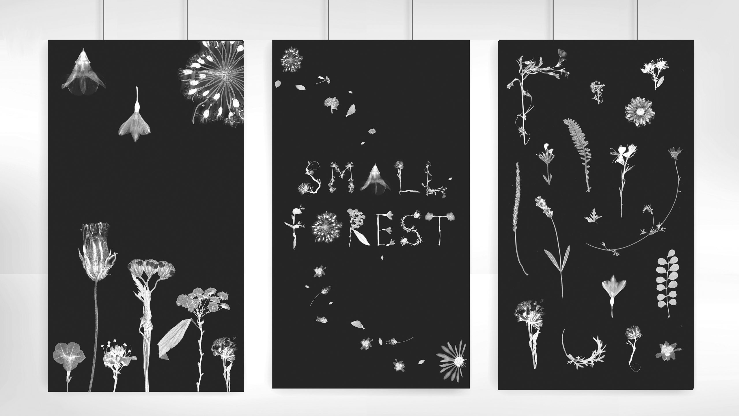posters by Sophy Lee