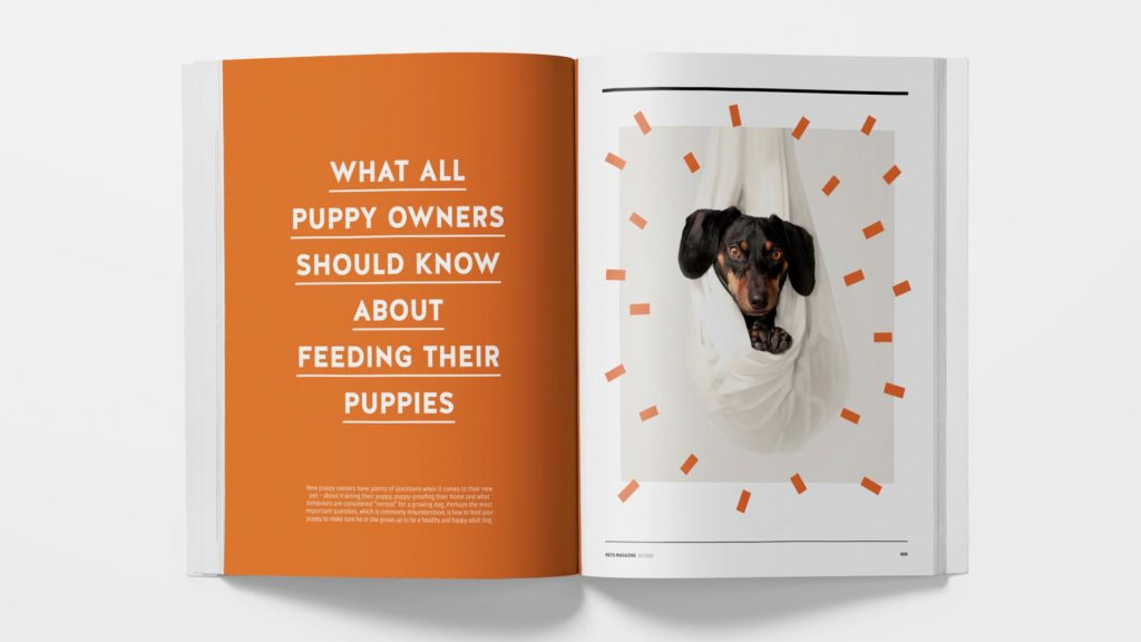 Pets magazine by Shuhan Lu